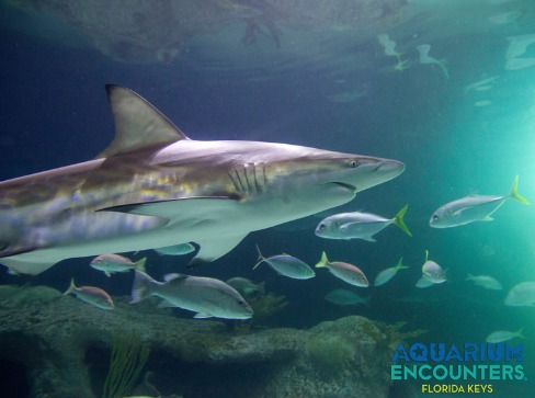 Tour the Florida Keys and interact with sea life at Aquarium Encounters